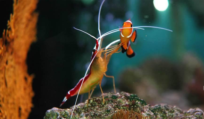 生态鱼缸led灯能养水草吗