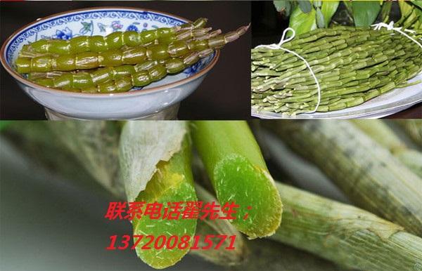 北京哪里有卖铁皮石斛、北京正宗霍山铁皮石斛