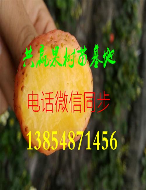 优乐国际娱乐登录大棚草莓苗-种苗价格-大棚草莓