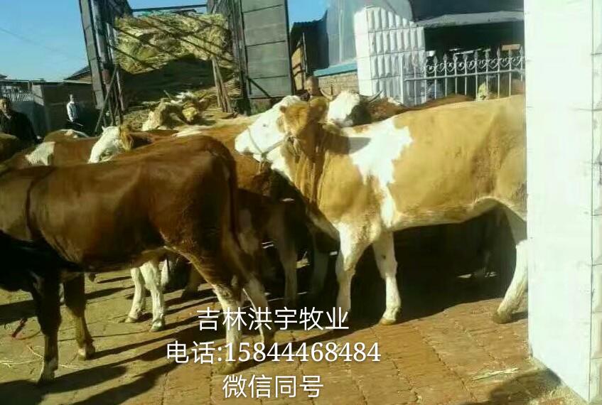 母牛的全新交易价格