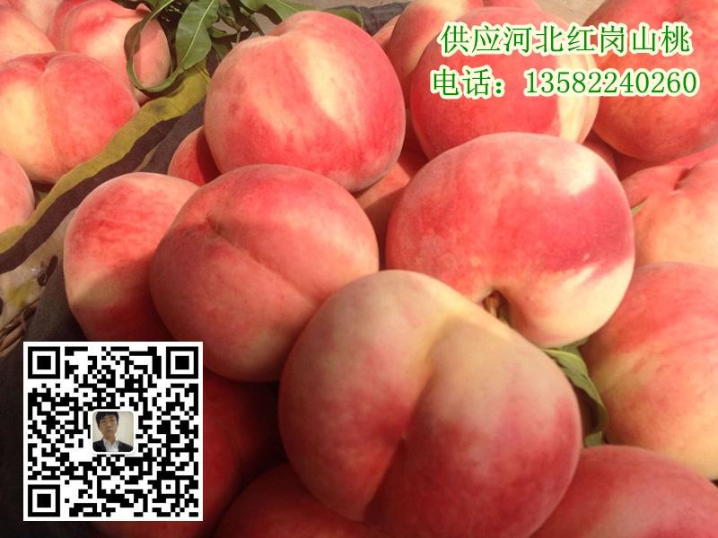 河北保定桃子多少钱量大质优价格合理