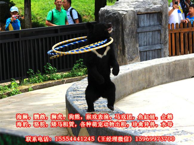 租赁活体企鹅、宁波市