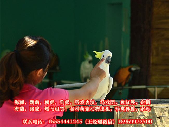 好口碑的马戏团表演、衢州市
