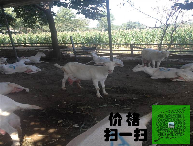晋中有卖奶山羊的吗