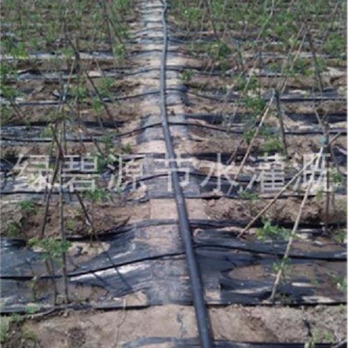 育苗灌溉/节水灌溉批发/灌溉