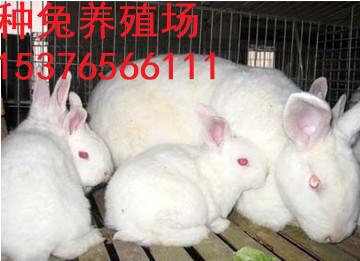 天津万翔种兔养殖场