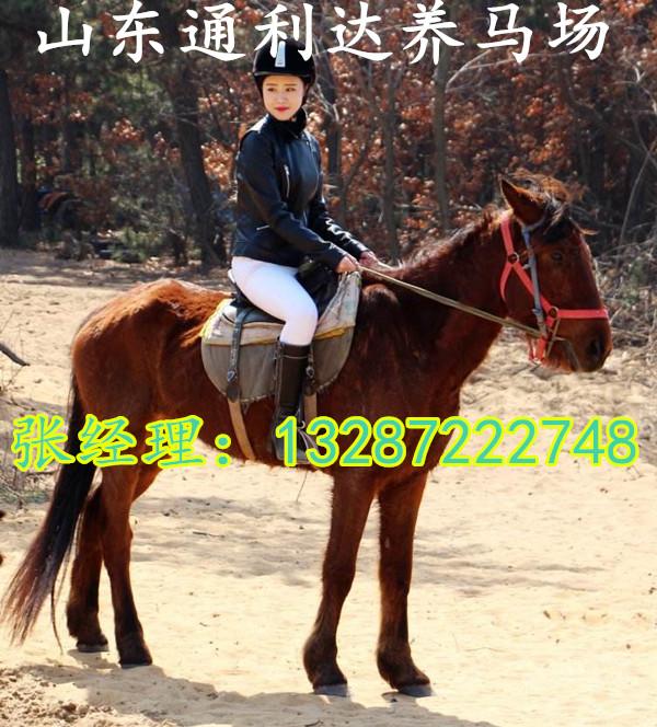 哪里卖旅游马什么马价格比较好13287222748