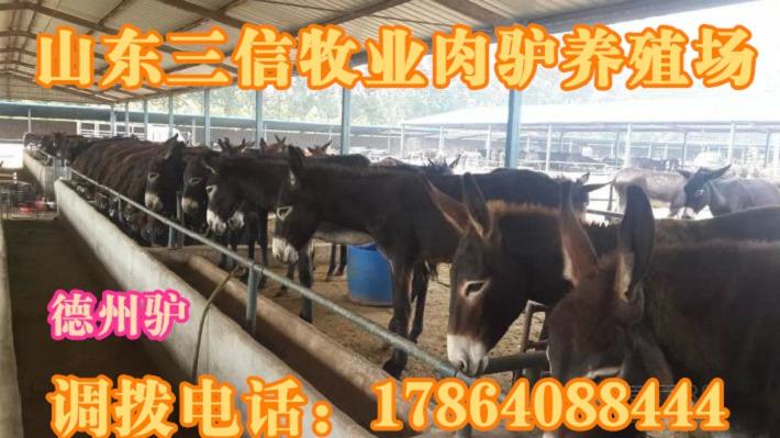 卓资县山东地区买羊真实可行