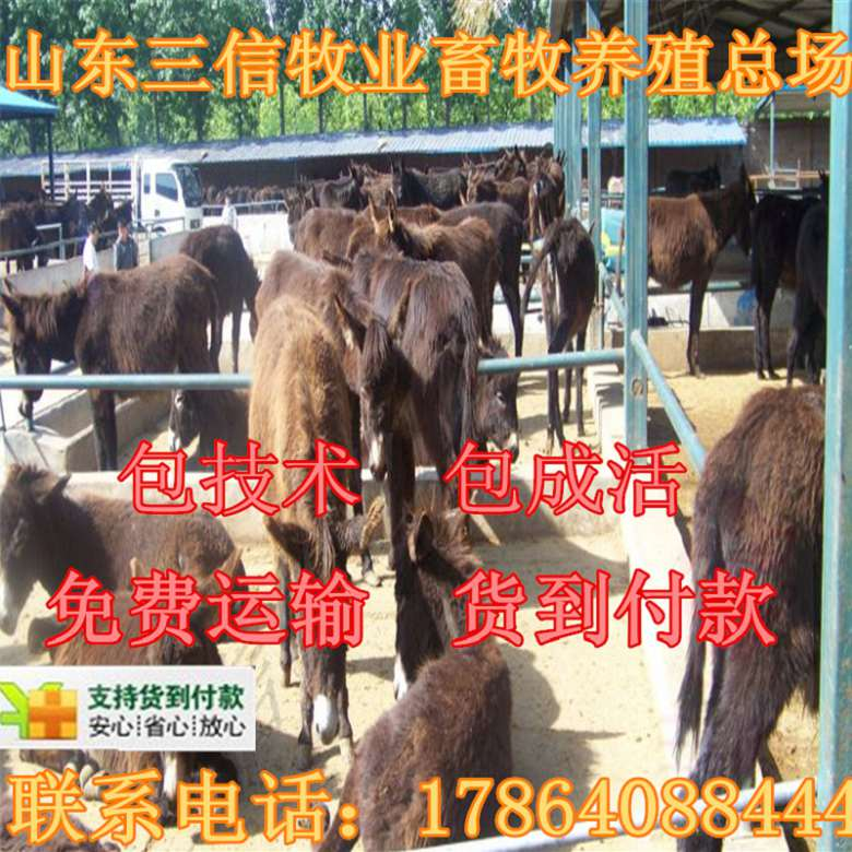 石台县肉羊屠宰羊多少钱一斤