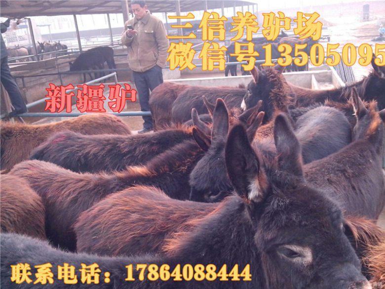 台江区黑山羊肉羊多少钱一只