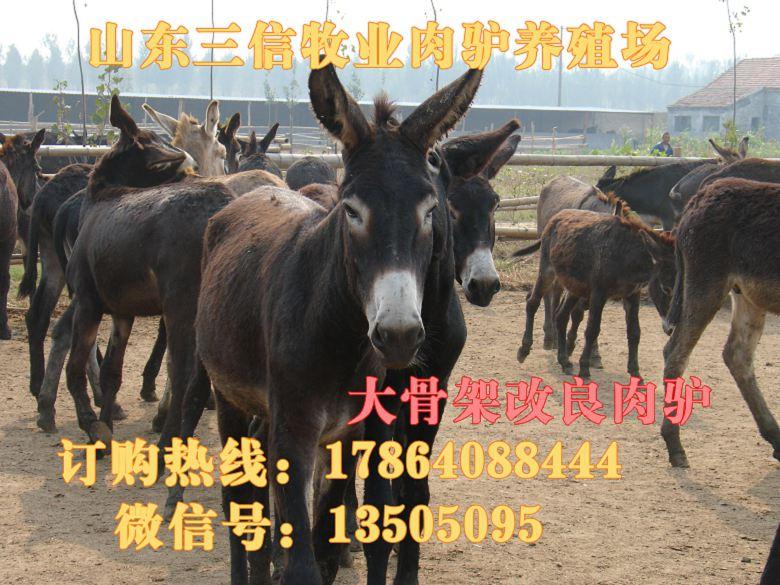 仓山区100斤的黑山羊多少钱