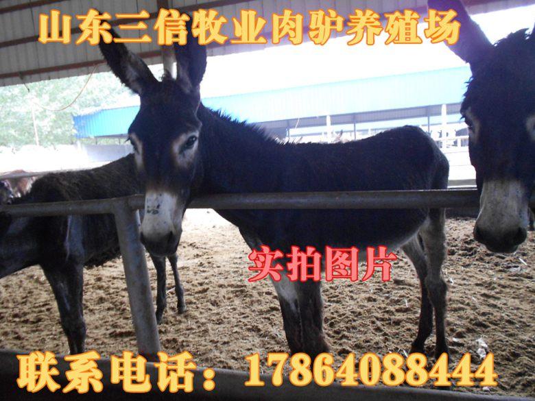 肉羊多少钱一斤藤县