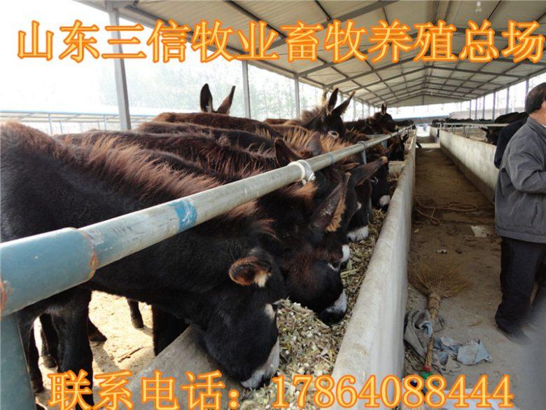 山羊8元一斤能买到吗合浦县