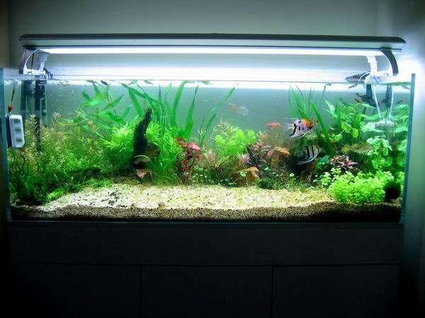 长沙大型鱼缸中选择水草灯