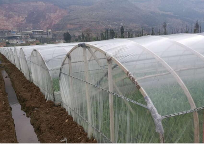 黔南布依族苗族自治州地区好用的大棚膜在哪儿买     -贵州蔬菜大棚膜