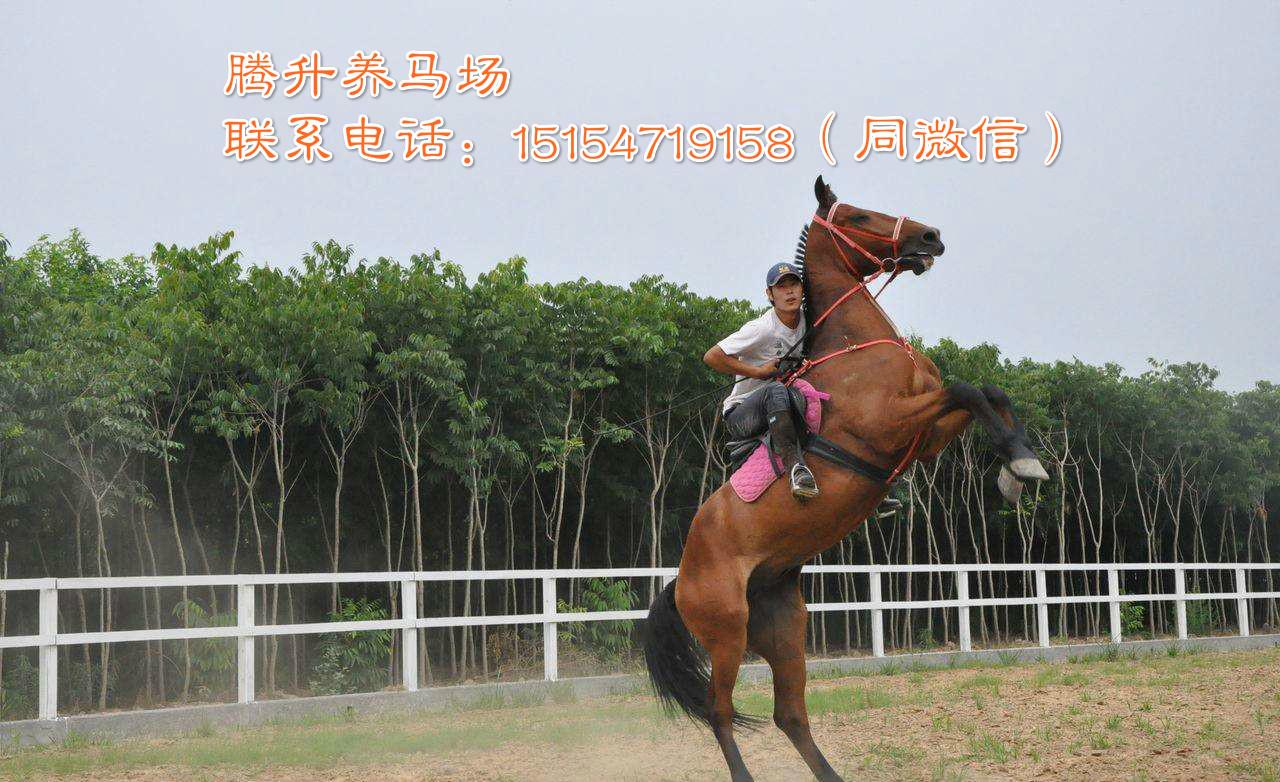 贵州遵义市温血马跑的快吗