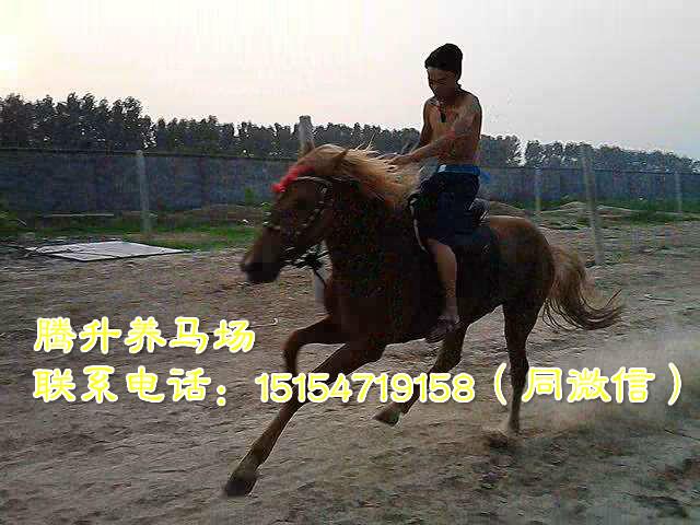四川甘孜藏族自治州养一匹马效益