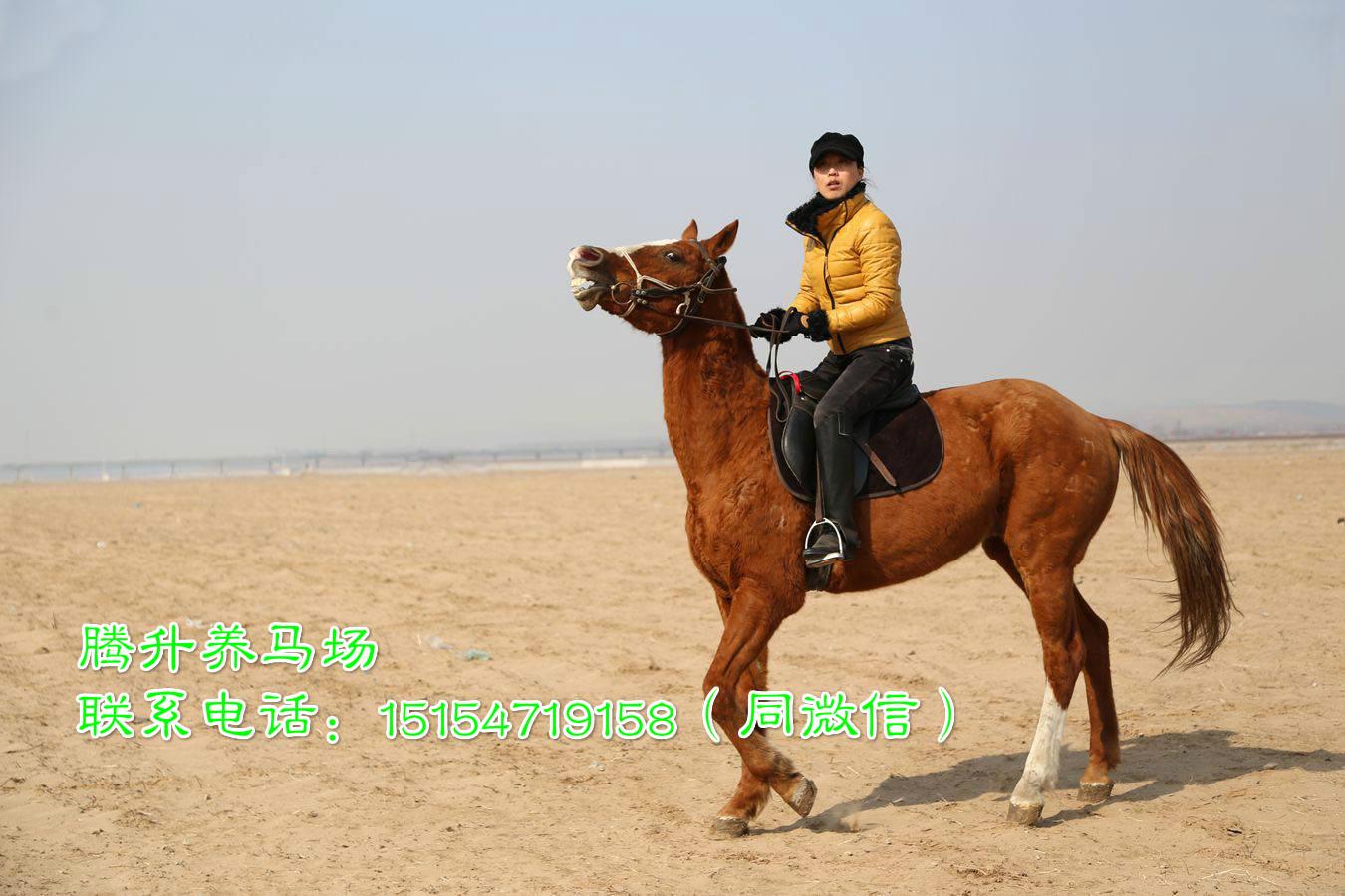 湖北襄阳市矮马养殖场