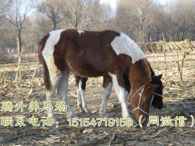 新疆伊犁哈萨克自治州养马中心
