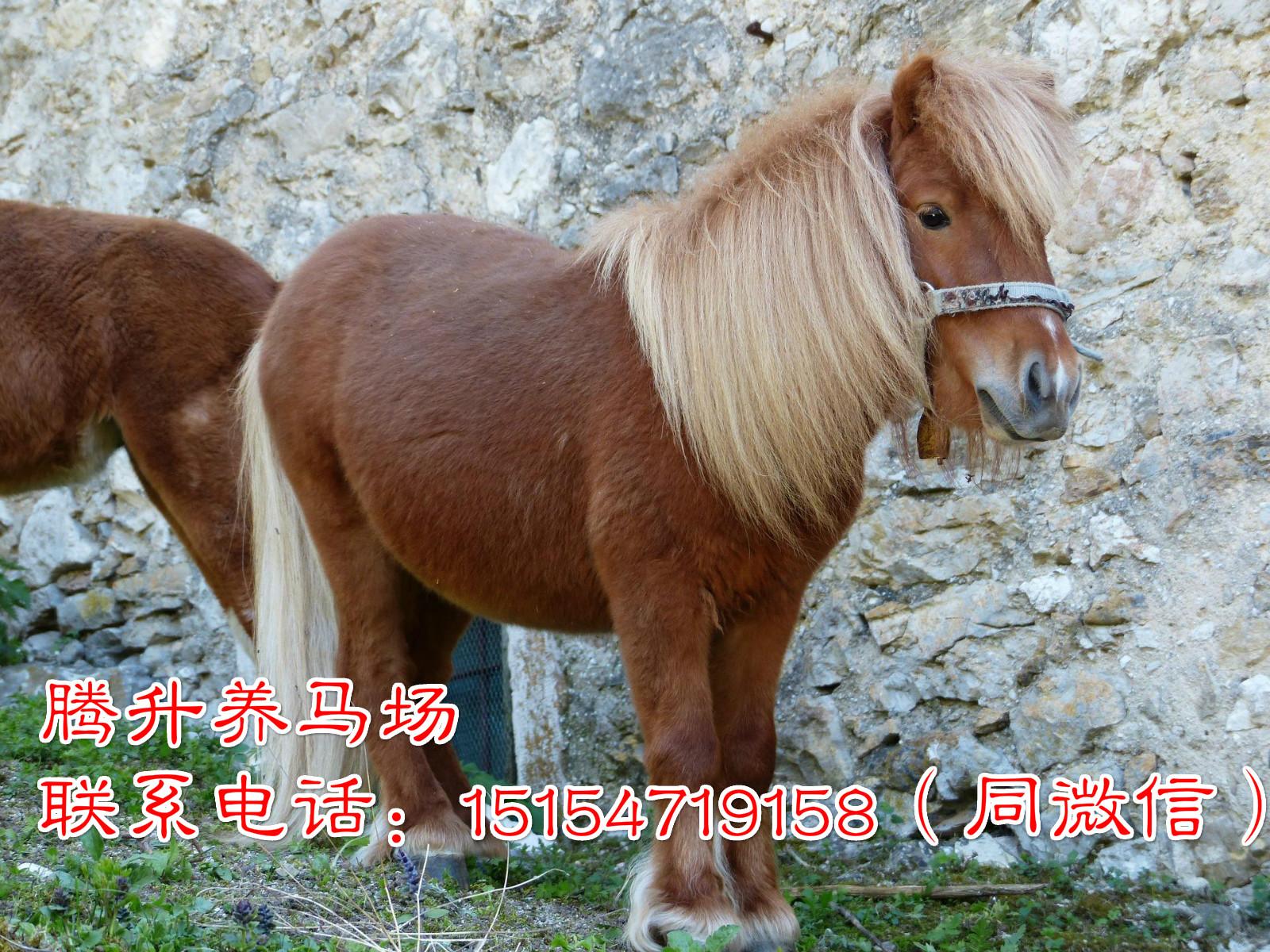江苏扬州市肉马价格