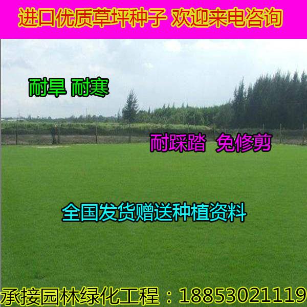 黑龙江鹤岗哪里出售高丹草种子
