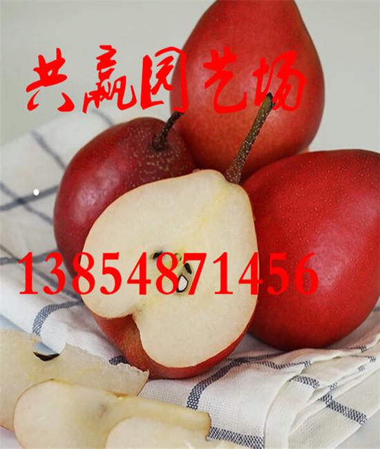 河北唐山市哪里有卖桃树苗产区出售报价