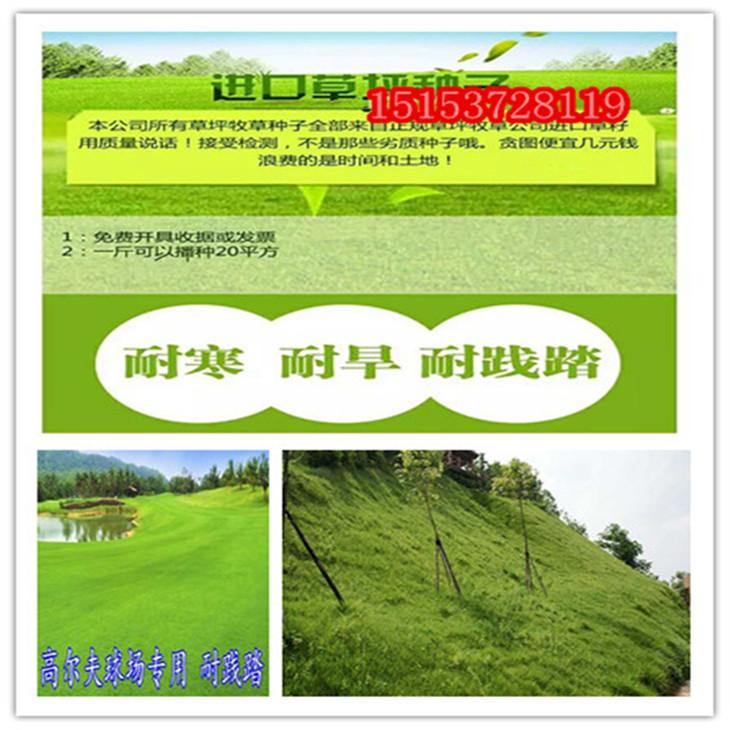 江门市草坪绿化用的草哪里卖的