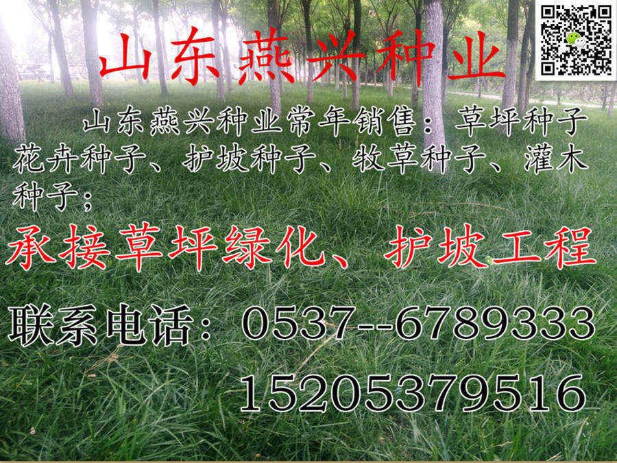 广西省柳州市绿化草种子皮多少钱一平方