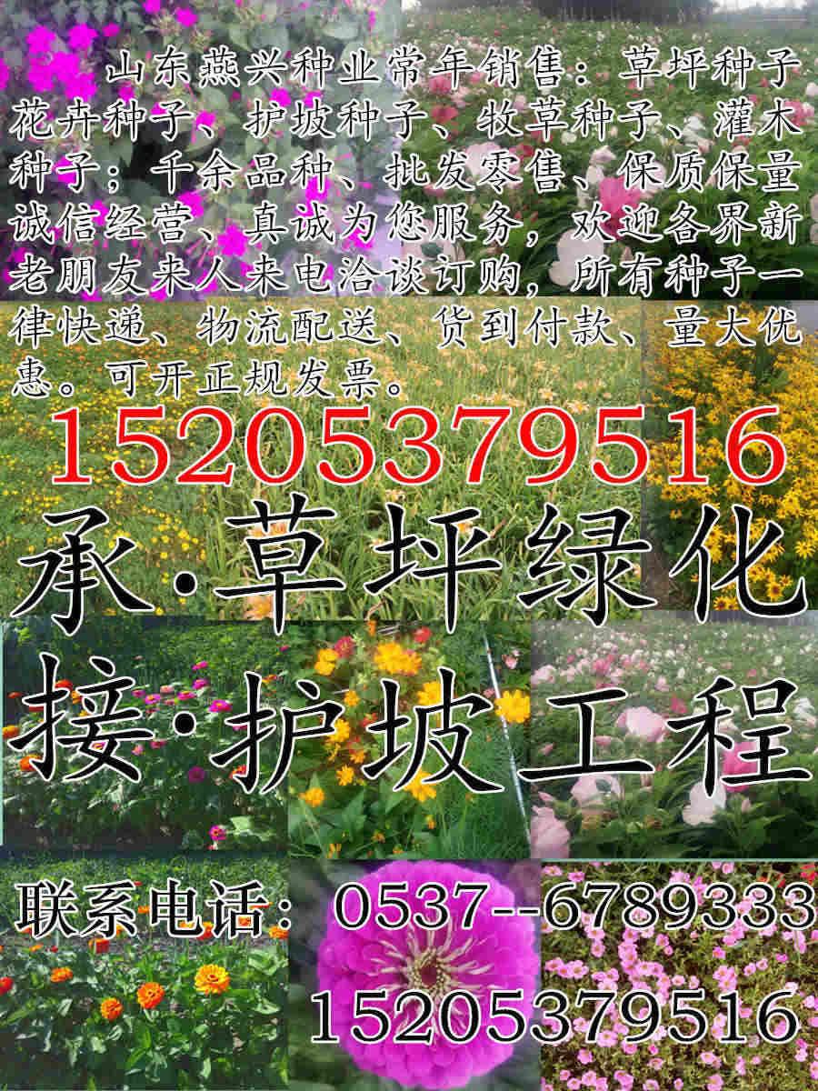 重庆市铜梁县绿化百慕达草种子价格