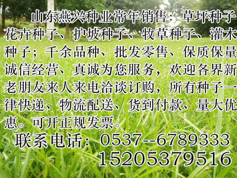 广东省佛山市护坡用草种子坪种子价格