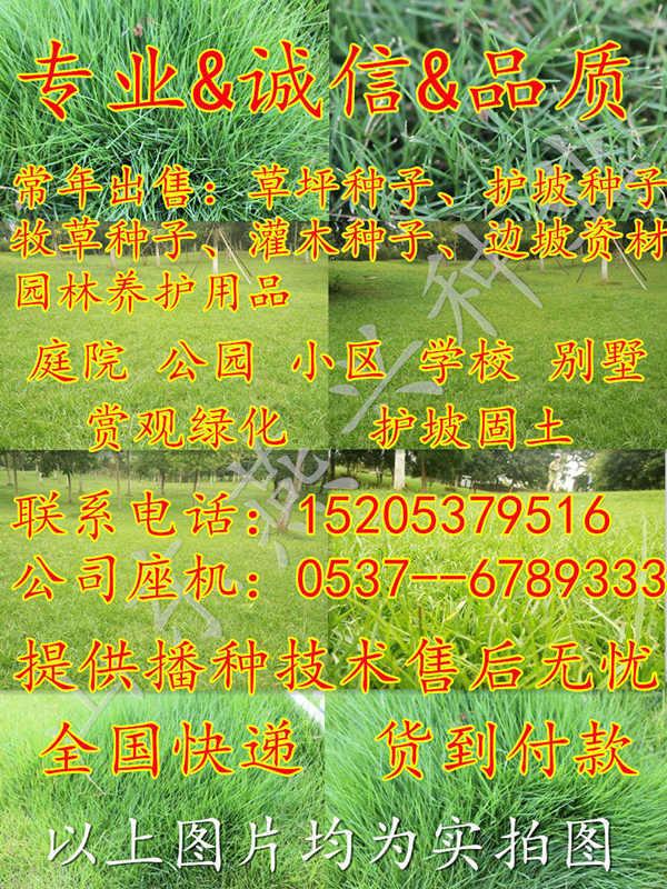 贵州省安顺市草坪种子草种子价格