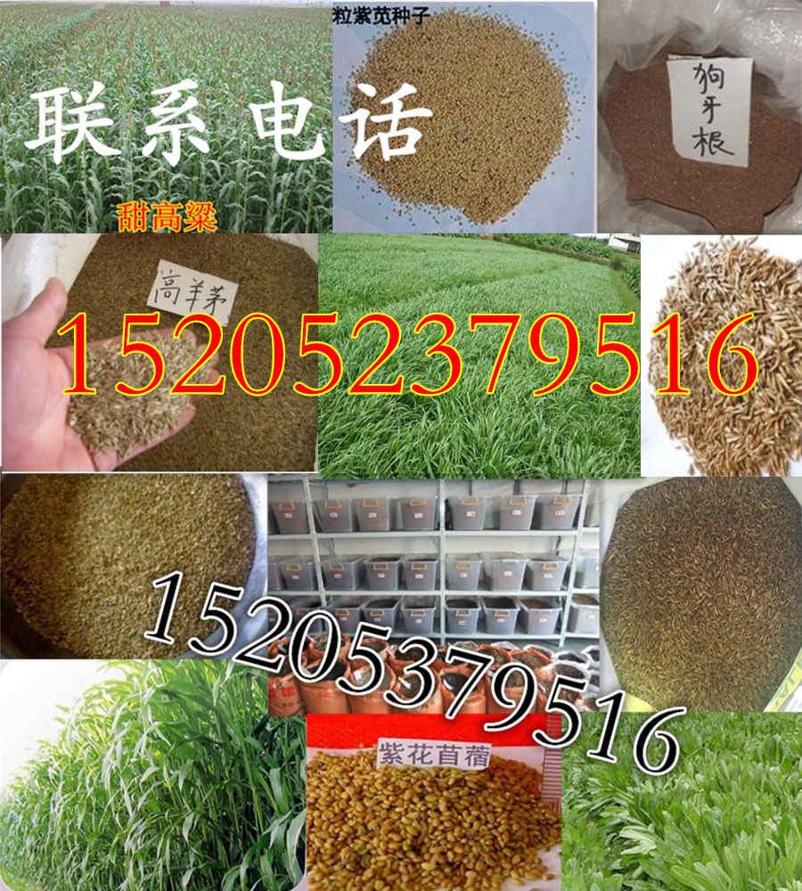 重庆省江津区护坡草种子王什么时候种