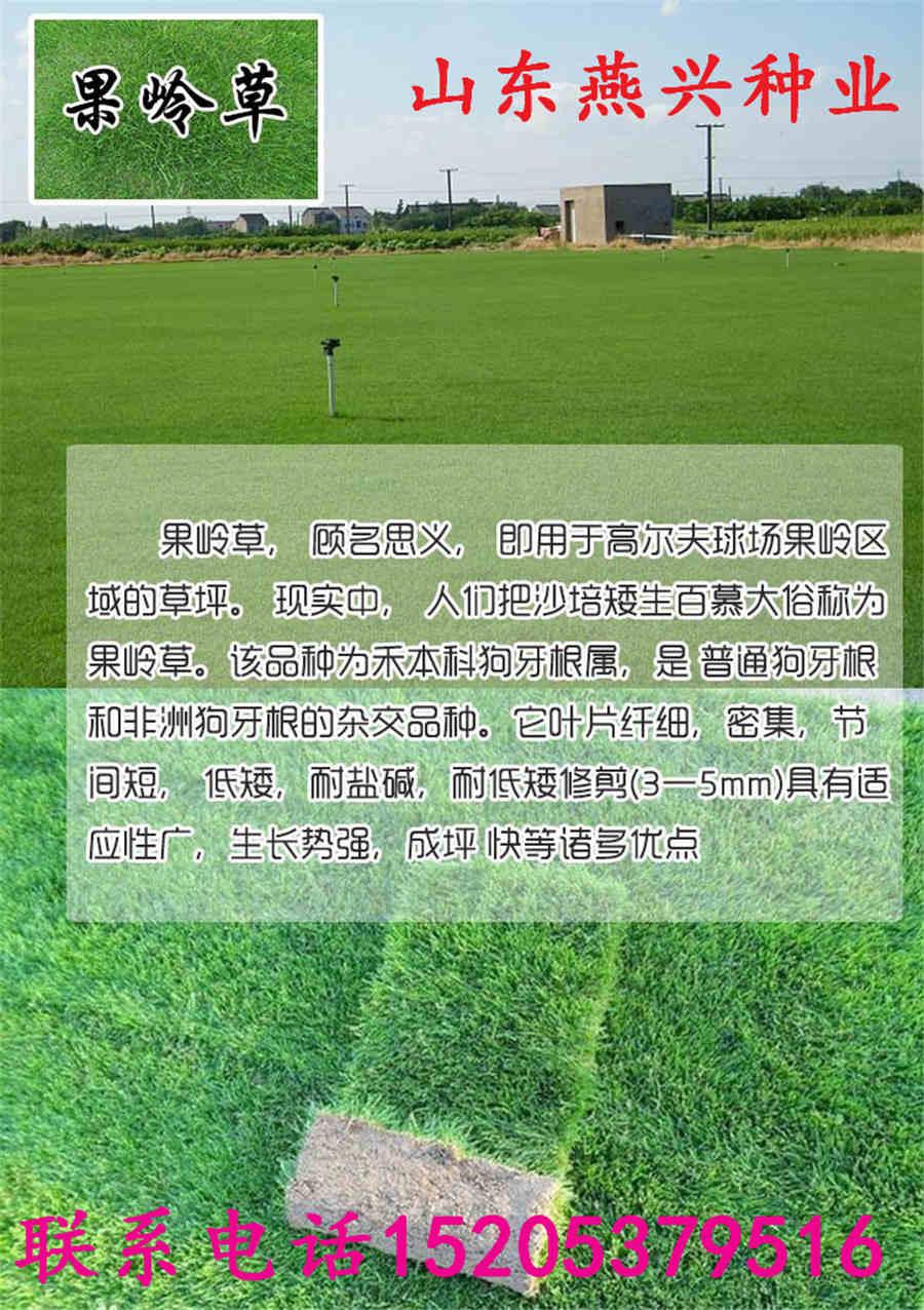 江苏省常州市城阳卖绿化草种