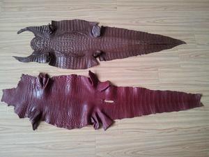 南通专业的鳄鱼皮 鳄鱼标本厂家