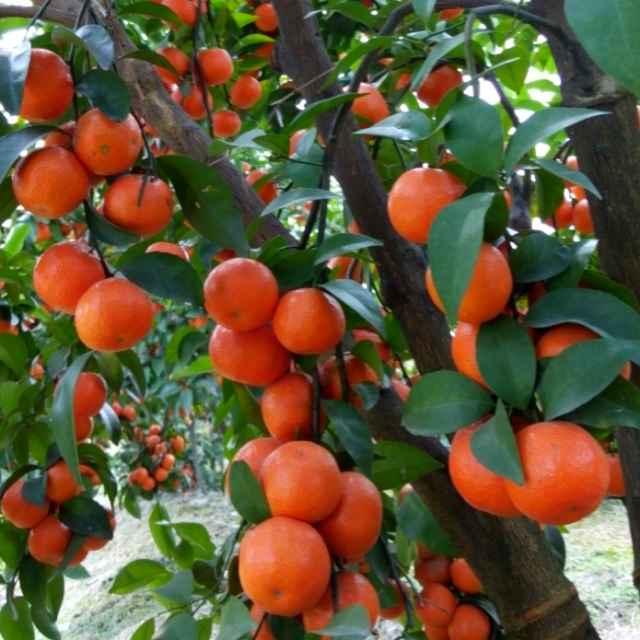 贵州优良的砂糖橘长寿专用膜供应商 六盘水农用薄膜厂家