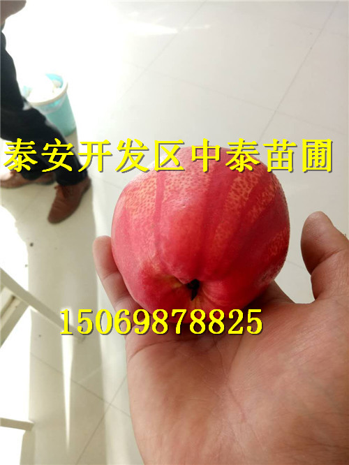 广东深圳附近哪里有早熟石榴苗价格低