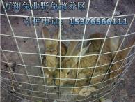 成都金牛纯种野兔养殖场种兔的价格