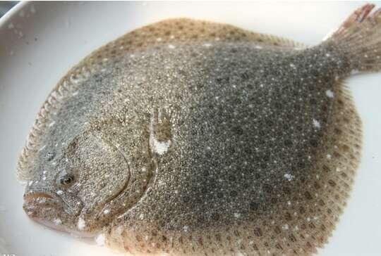 葫芦岛销量好的多宝鱼批发 上海多宝鱼