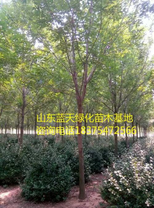 广州市海珠区8公分北栾多少价位上车