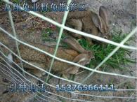 郴州万翔种兔养殖场野兔兔苗的价格提供养殖技术