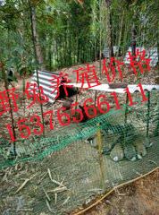 沁水县万翔种兔养殖场肉兔优势品种新西兰肉兔的