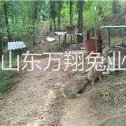 静乐县万翔种兔养殖场伊拉肉兔养殖场种兔的