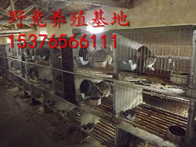 汾阳万翔种兔养殖场獭兔种兔养殖场