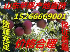 山东临沂苹果 山东日照苹果 山东苹果批发价格