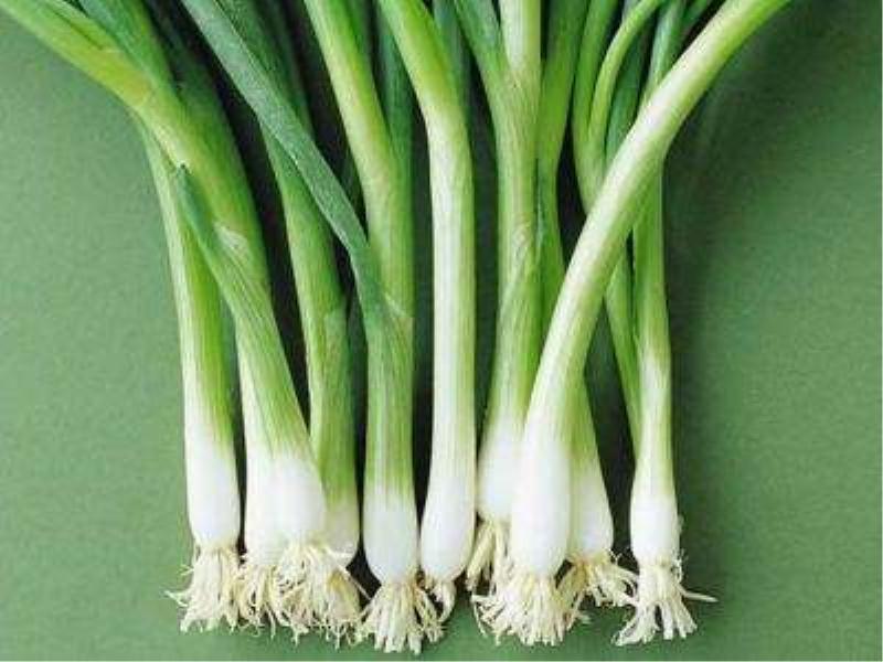 泉州蔬菜公司 泉州蔬菜厂家 蔬菜 蔬菜行情 雅意蔬菜