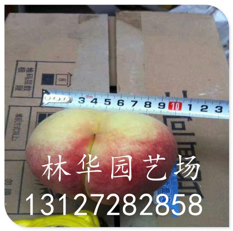 福星樱桃苗几个品种13127282858