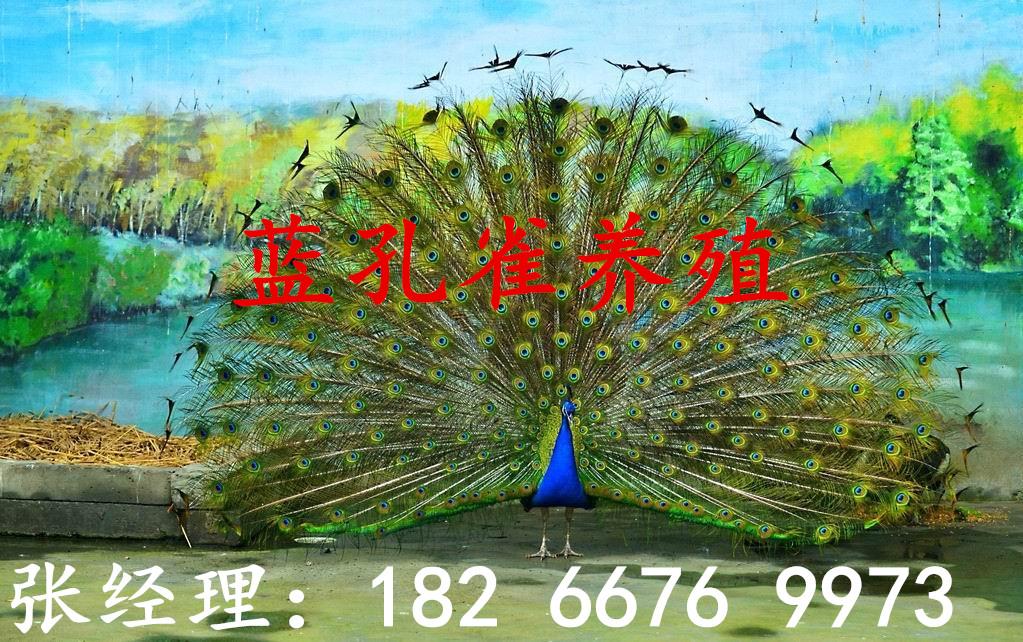 萍乡租赁矮马价格