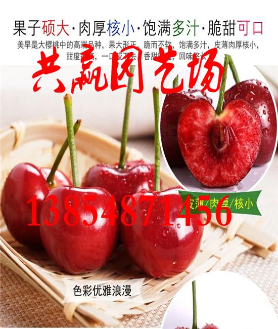 浙江湖州哪里有采摘园果树苗基地卖多少钱一棵