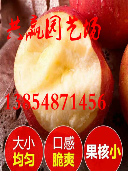 安徽蚌埠附近有大樱桃树苗育苗基地卖多少钱