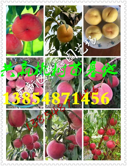 黑龙江牡丹江附近有桃树苗育苗基地卖多少钱
